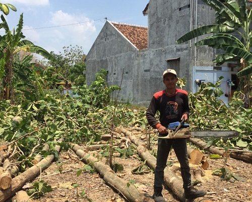 LAYANAN JASA TEBANG PROFESIONAL DAN TERMURAH DI SELURUH INDONESIA